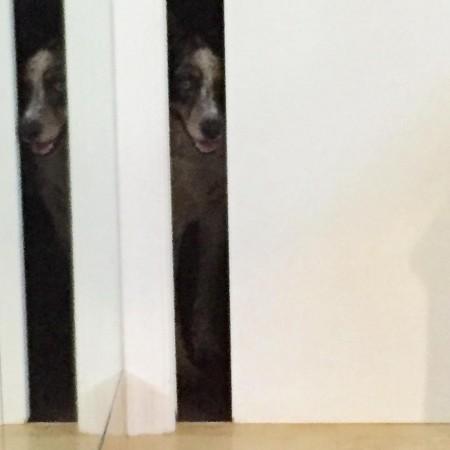 I always feel like somebodys watching me django dog dogsofinstagramhellip