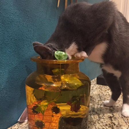 My friends cats wont drink from anything but the fishbowlhellip
