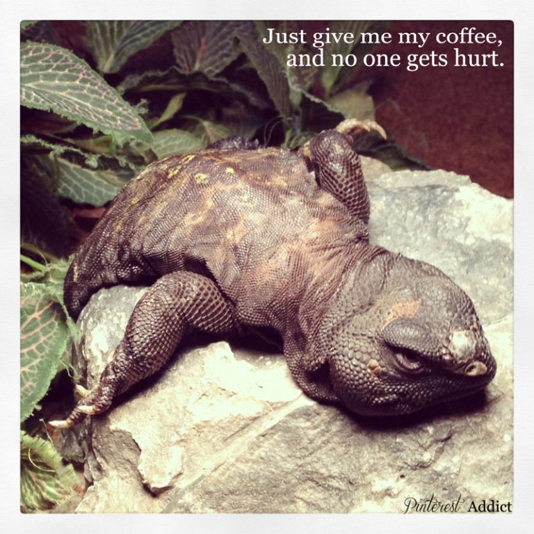 give me my coffee, and no one gets hurt