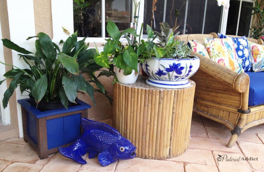 plants fish blue
