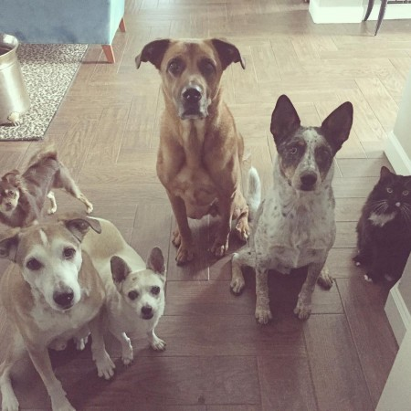 Guess who was holding treats? Luci Elvis Brownie Charlie Mickeyhellip