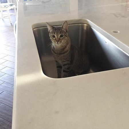 Stormageddon is making herself comfortable in our new moen sinkhellip
