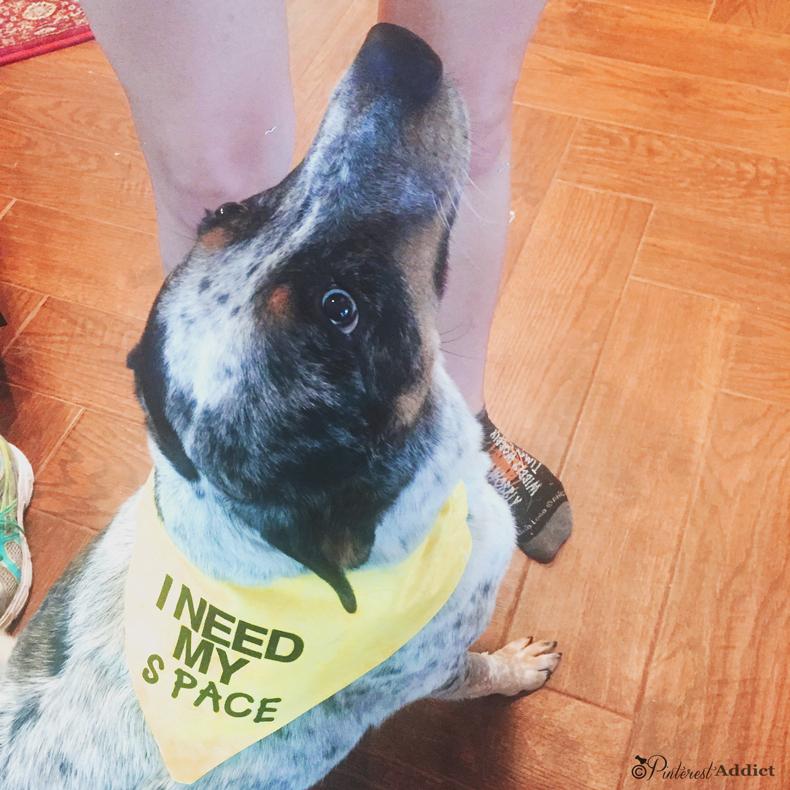 I need my space anxiety collar - I Need my space dog bandana