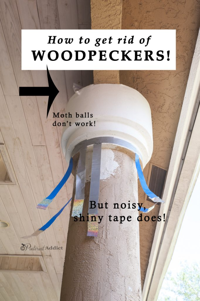 How To Get Rid Of Woodpeckers Pinterest Addict