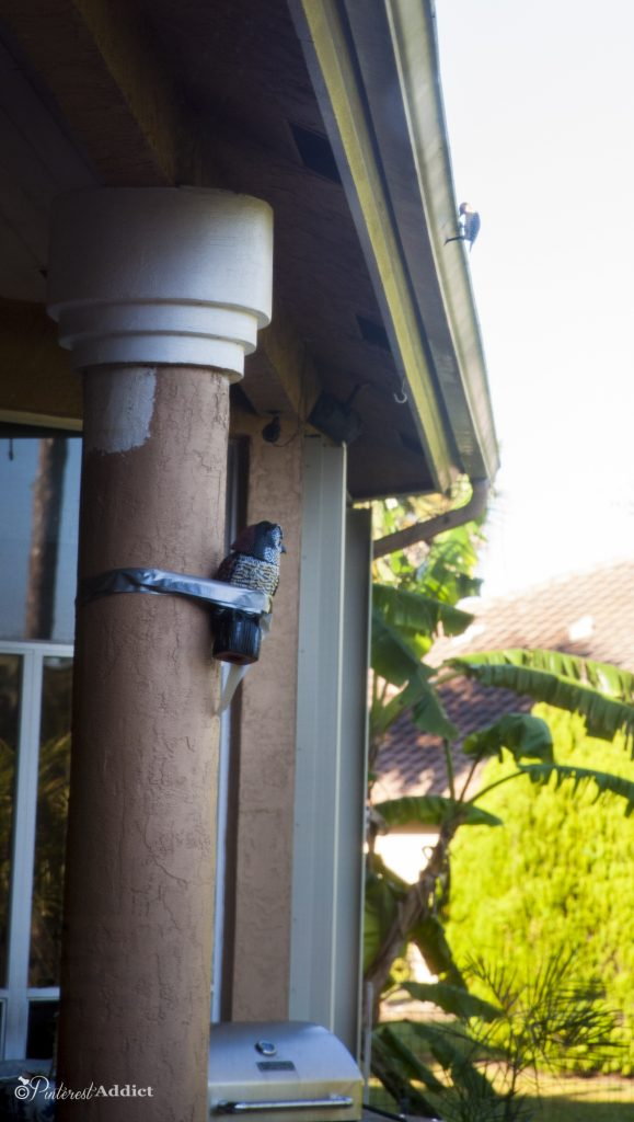 Plastic owls do not deter woodpeckers