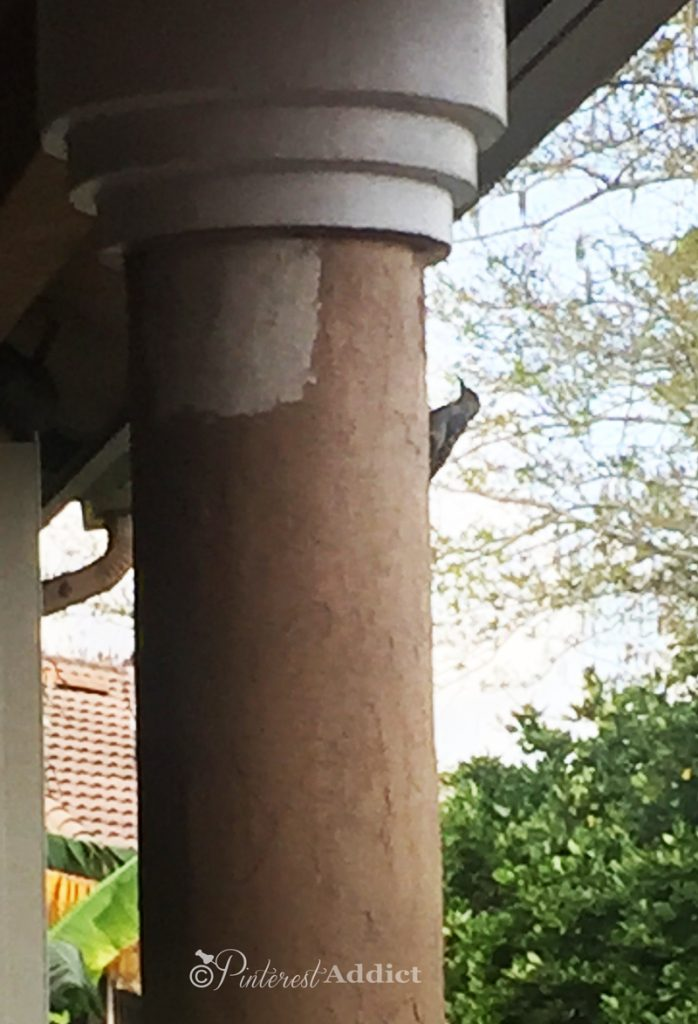 How Do You Get Rid Of Woodpeckers When They Are Damaging Your House? This Is