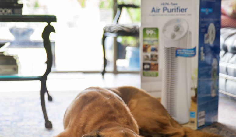 Cleaning the Air – the Febreze Air Purifier
